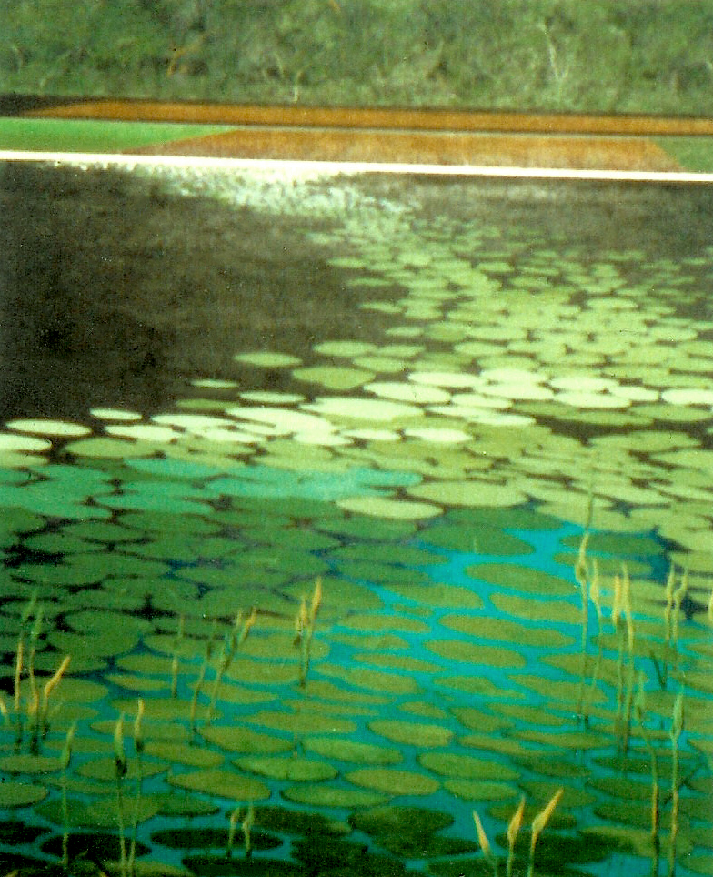 "Lily Pads, 1978, acrylic on canvas, 36"" x 49"""